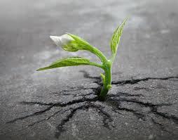 rootthroughconcrete
